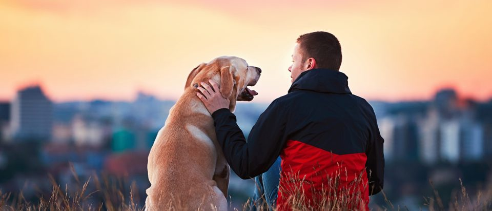 Guaranteed Ways to Improve Your Bond with Your Dog